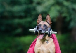 Ćwiczenia aerobowe, czyli doskonałe dotlenienie mięśni